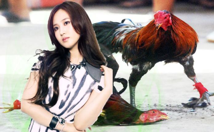 bandar taruhan ayam
